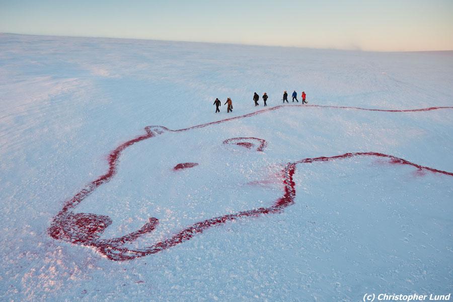 Roter Eisbär