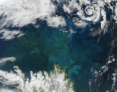 140816 phytoplankton island