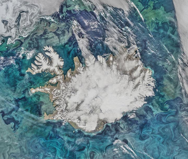 Island Algenbluete