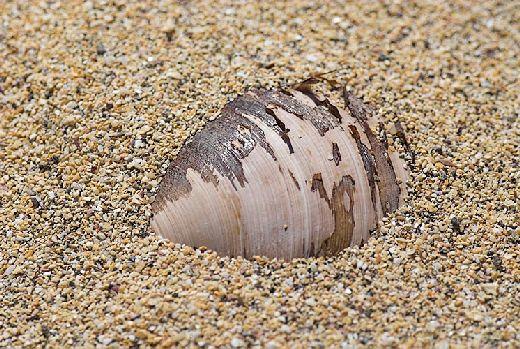 20070913155954_muschel-im-sand.jpg